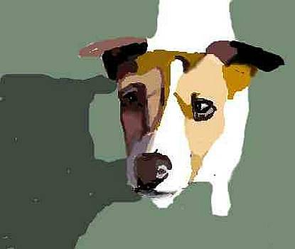 Jack Russell in sun by Michael Werner