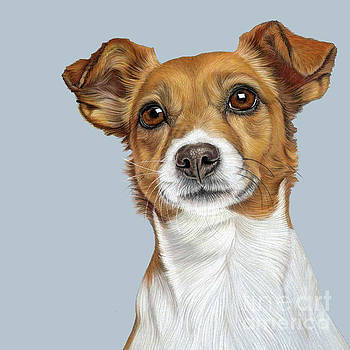 Jack Russell Terrier by Donna Mulley