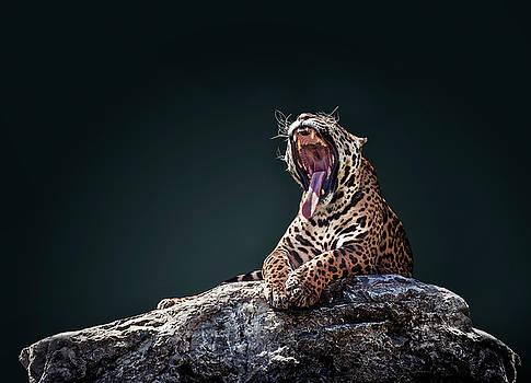 Jaguar 4 by Ivan Vukelic