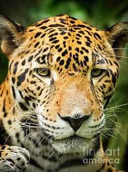 Tim Hester - Jaguar Cat Portrait
