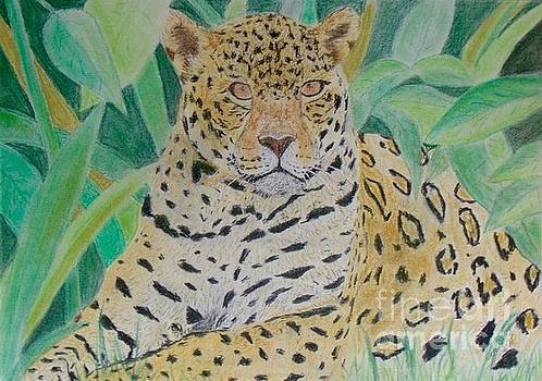 Jaguar by Cybele Chaves