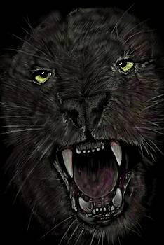 Jaguar by Darren Cannell