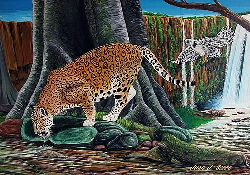 Jaguar in the Amazon jungle by Juan Jose Serra