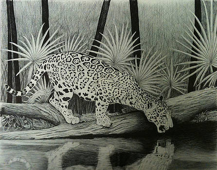 Jaguar in the Rainforest by Reppard Powers