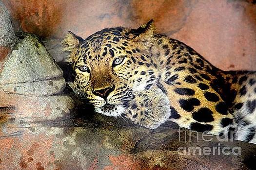 Jaguar,   by Janice Spivey