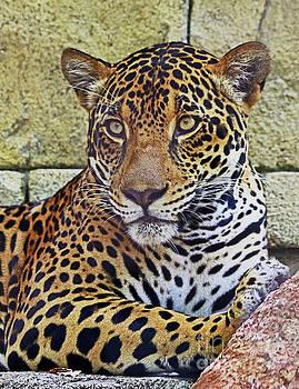 Jaguar Portrait by Larry Nieland
