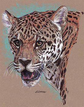 Jaguar solo by Richard W Cleveland