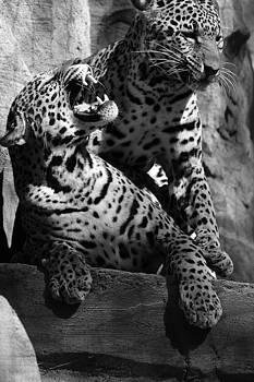 Jaguars - Two Can Play This Game by Jake Danishevsky