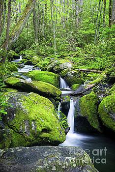 Jakes Creek Falls by Patrick Shupert