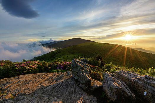Jane Bald Sunset by Greg Dollyhite