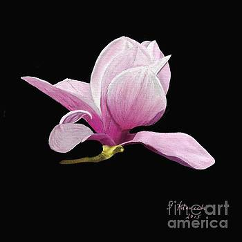 Japanese Magnolia Floral by Judy Filarecki