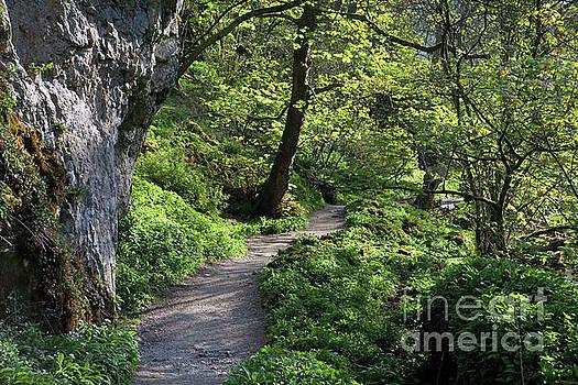 Janet's Foss path by Gavin Dronfield