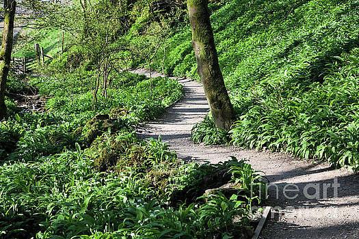 Janet's Foss woods path by Gavin Dronfield