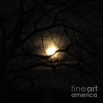 January 2016 Full Moon through Walnut Tree by Conni Schaftenaar