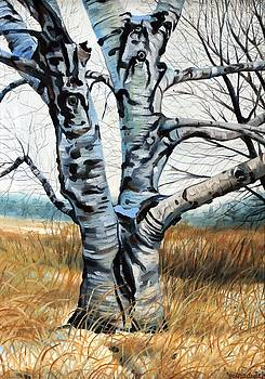 January Birch by Phil Chadwick