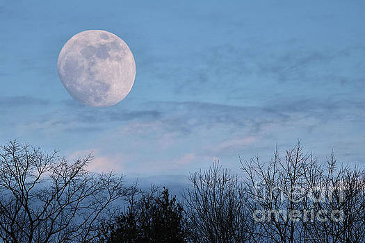 Sandra Huston - January Blue Moon Rising