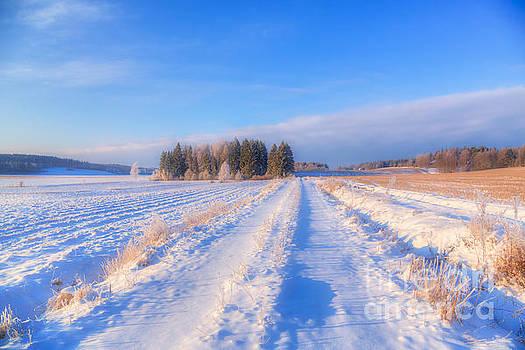January Day 3 by Veikko Suikkanen