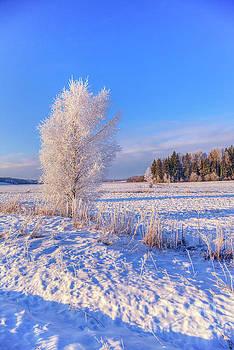 January Day by Veikko Suikkanen