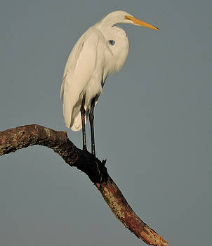 January Egret by Peg Toliver