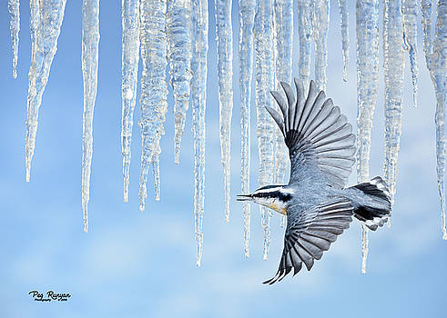 January Thaw by Peg Runyan