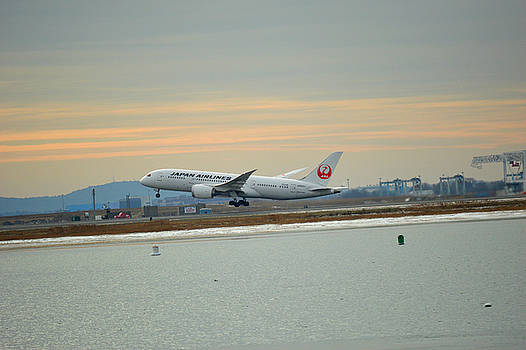 Japan airlines taking off by Daniel Sullivan