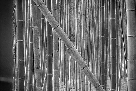 Erika Gentry - Japanese Bamboo