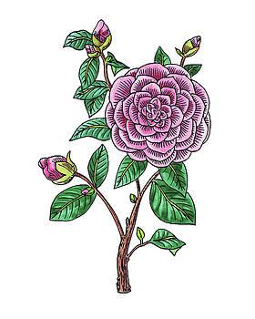 Japanese Camellia Flower Watercolor by Irina Sztukowski