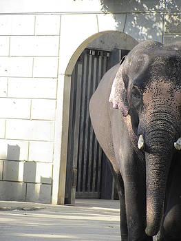 Japanese Elephant by Christina Shields