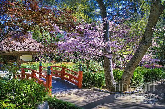 David Zanzinger - Japanese Garden Arched bridge