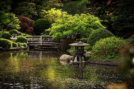 Japanese Garden by Mary D'Urso