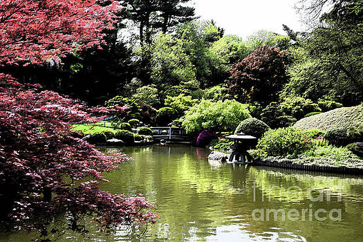Japanese Garden by Tom Wurl