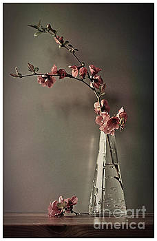 Japanese inspiration by Binka Kirova