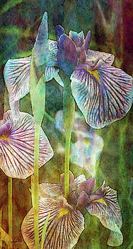 Japanese Iris Tall 2694 IDP_4 by Steven Ward