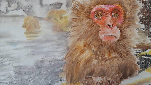 Japanese Macaque by Adekunle Ogunade