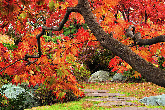 Japanese Maple Framing Path in Japanese Garden by Greg Matchick