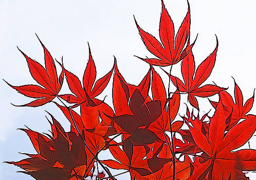 Dennis Cox WorldViews - Japanese Maple Leaves