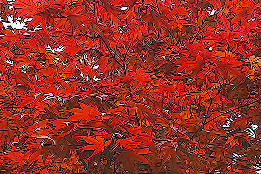 Dennis Cox WorldViews - Japanese Maple Tree