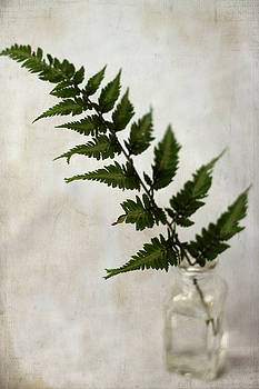 Japanese Painted Fern by Sherry Hahn
