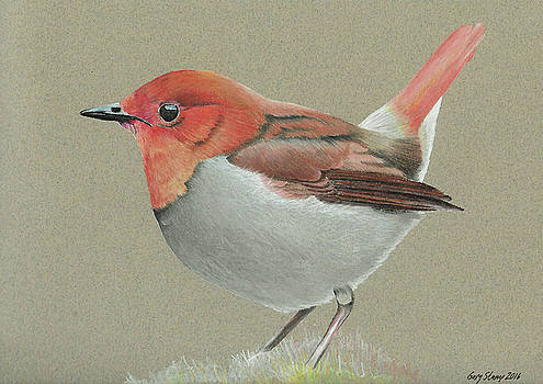Japanese Robin by Gary Stamp