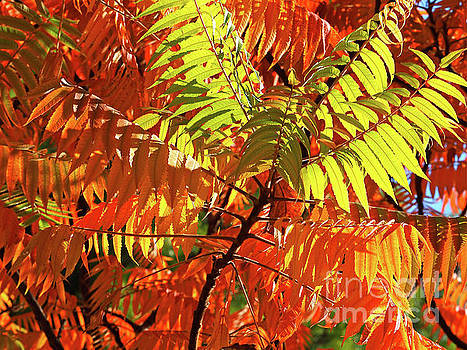 Japanese Rowan Tree in Autumn Colours by Alex Cassels