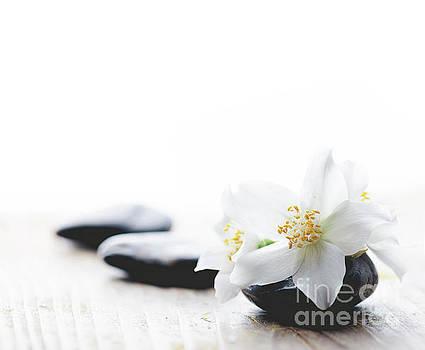 Jasmine flower on spa stones by Jelena Jovanovic