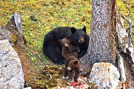 Adam Jewell - Jasper Black Bear Dinner