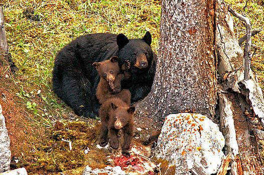 Adam Jewell - Jasper Black Bear Family Feast