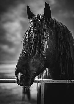 Jay the Rasta Horse by Debby Herold