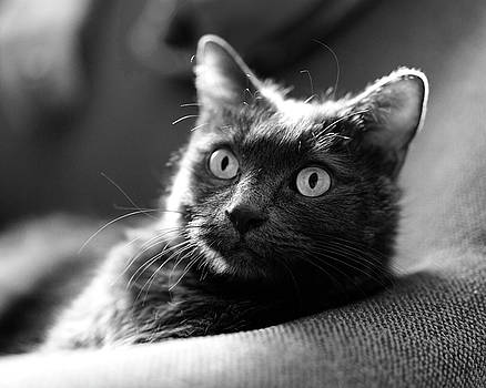 Jeff the Cat in Black and White by Susan Stone