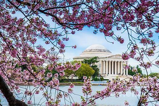 Jefferson Memorial Cherry Blossoms by Jim DeLillo