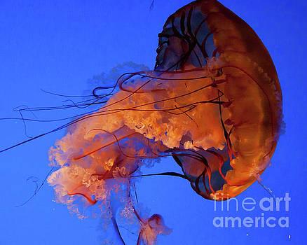Jelly Fish 1 by Susan Cliett