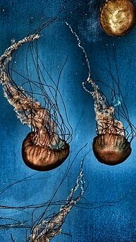 Jelly Fish by Susan Ferency