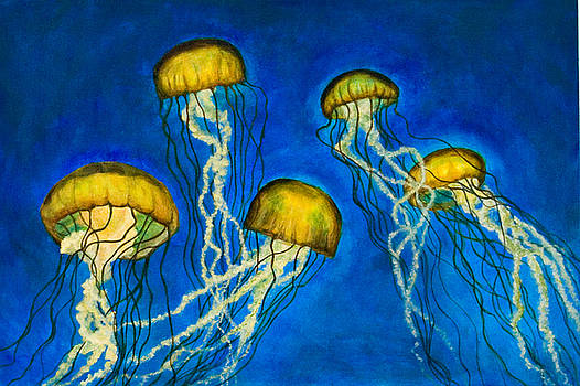 Jellyfish by Julia Collard