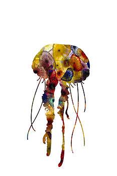 Jellyfish by Michael Colgate